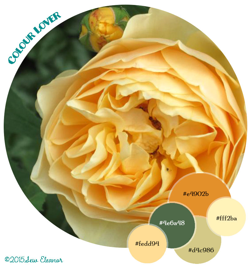 ColourLover-yellowRose-04092015