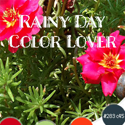 Rainy Day Color Lover