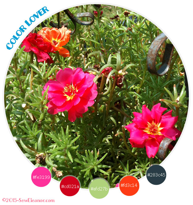 Portulaca Rainy Day Color Lover