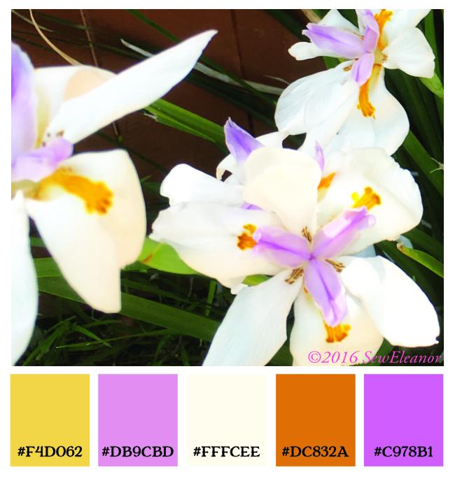 Iris Color Pallet